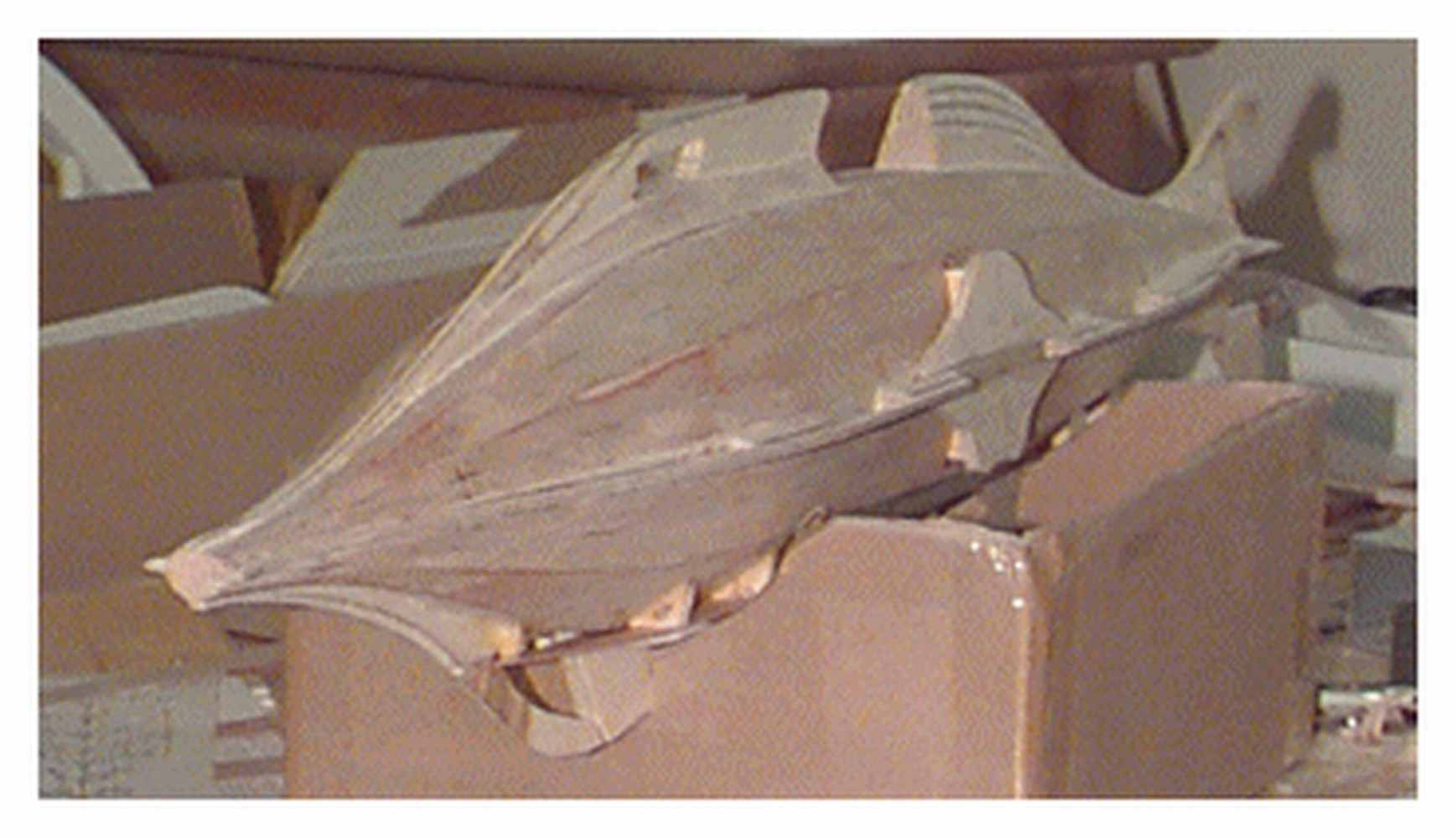 Underside of the model showing the built out and taper of the rear fin. The lines on the fin are the various layers of wood and plywood areas