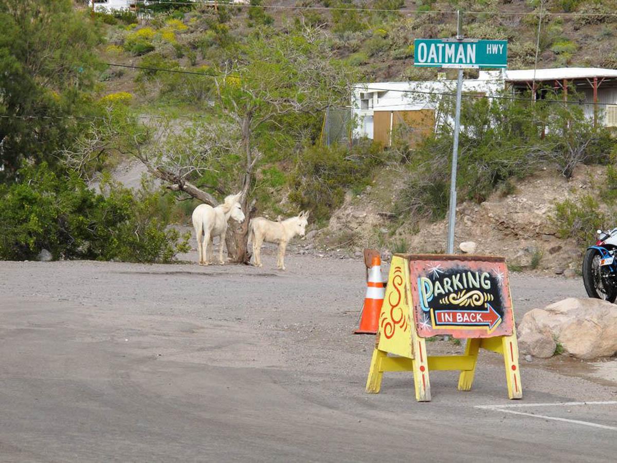 Driving Route 66, Oatman AZ and donkeys