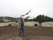 In Alpine taking a basic falconry session with Sky Falconry