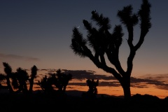 Joshua Tree national park Boy Scout trail