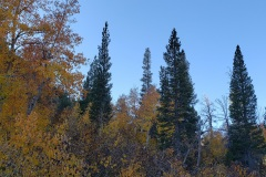 North Lake and autumn color near Bishop