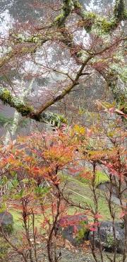Fog and rain in the Santa Cruz mountains