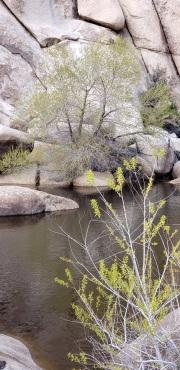 Joshua Tree National Park Baker dam area