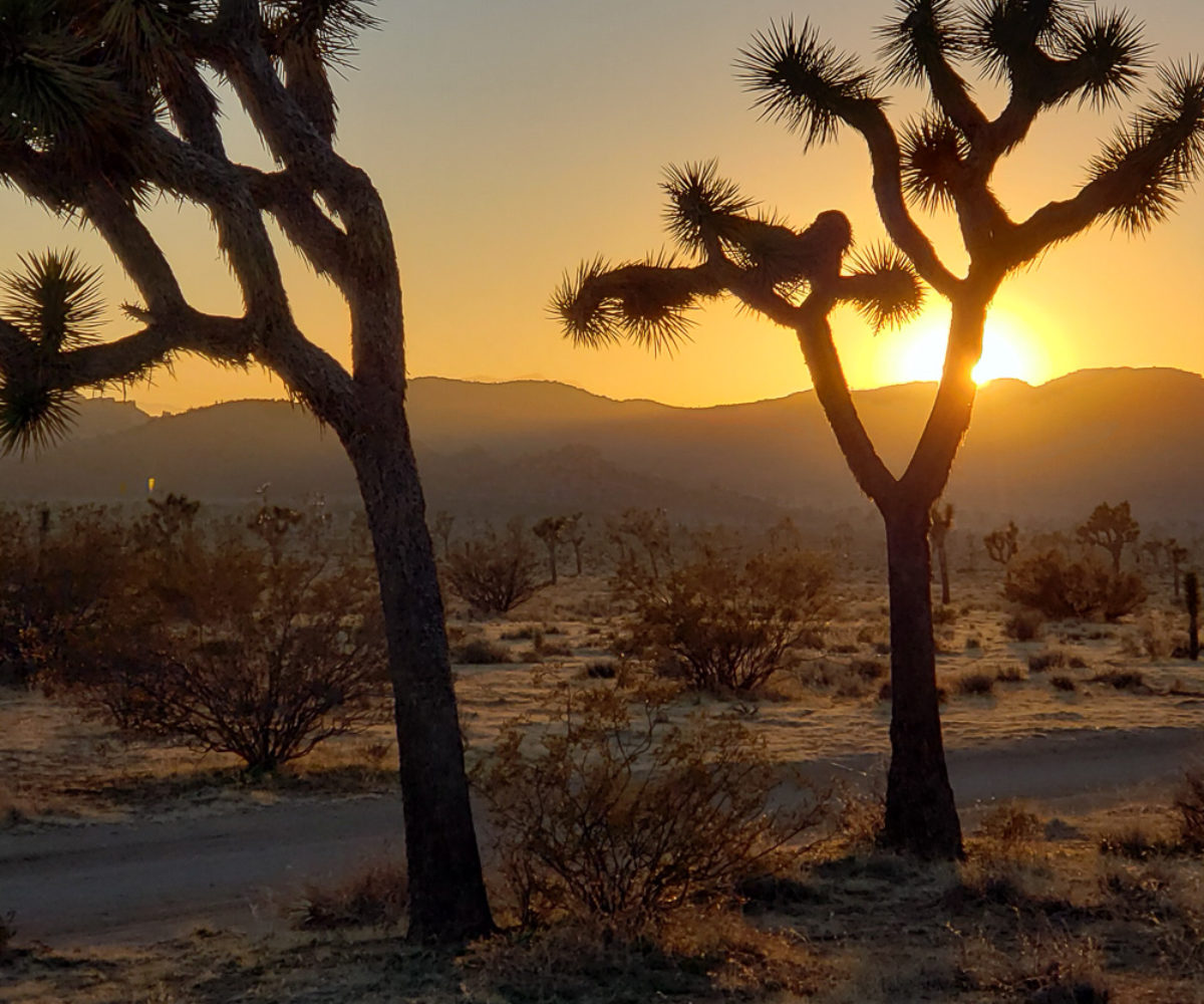 Joshua Tree National Park, CA – Feb 15 2020