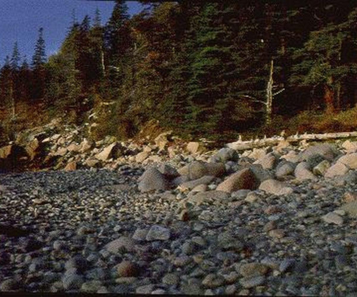 Northlight Photo Workshop, Acadia National Park ME, Oct 1997